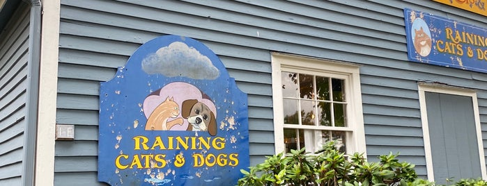 Raining Cats & Dogs is one of Mystic, CT.
