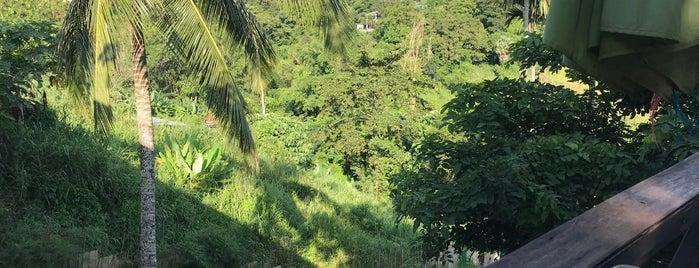เจ๊แตง วังน้ำเขียว is one of Yodpha's Liked Places.
