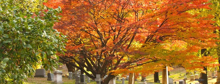 7 Best Spots for Fall Foliage in NYC