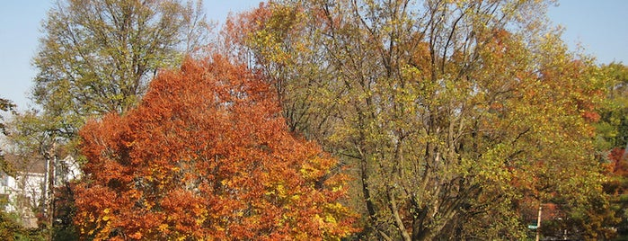 Wave Hill is one of 7 Best Spots for Fall Foliage in NYC.