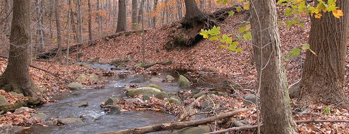 Greenbelt Nature Center is one of 7 Best Spots for Fall Foliage in NYC.