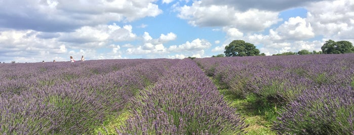 Mayfield Lavender Farm is one of London.