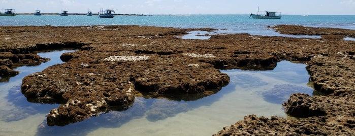 Praia do Forte is one of Julia'nın Beğendiği Mekanlar.