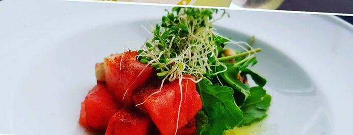 Vegetariano MX