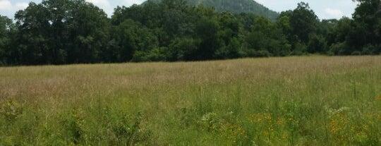 Pinnacle Mountain State Park is one of Lieux sauvegardés par Megan.