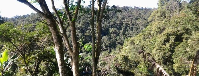 Parc Ranomafana is one of Madagascar.