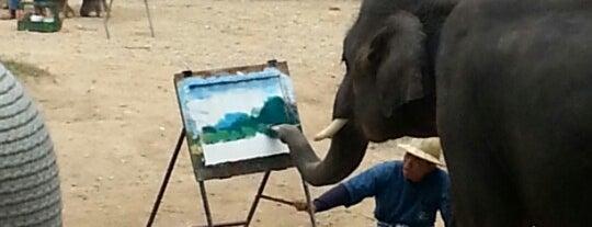 Maesa Elephant Camp is one of Tempat yang Disukai Christina.