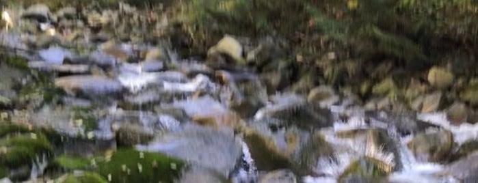 Mosquito Creek Trail is one of สถานที่ที่ Felicity ถูกใจ.