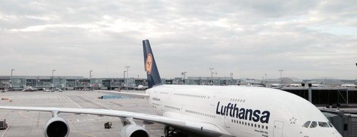 Lufthansa Flight LH 454 is one of The Lufthansa A380 flights.