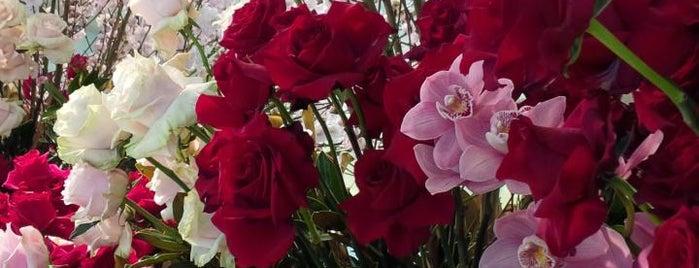 David Jones Flower Show is one of Must-visit in Darlinghurst.
