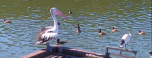 Centennial Park Duck Pond is one of Alfie's Playground.