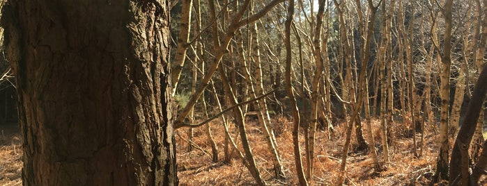 Rendlesham Forest is one of World Ancient Aliens.