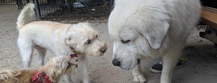 Di Mattina Dog Park is one of My Good Dog NYC: NYC Dog Runs.