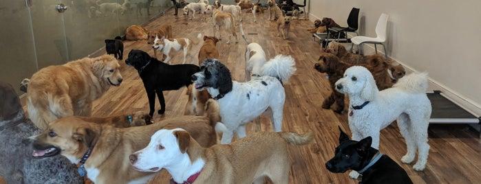 The Canine Corner is one of สถานที่ที่ M ถูกใจ.