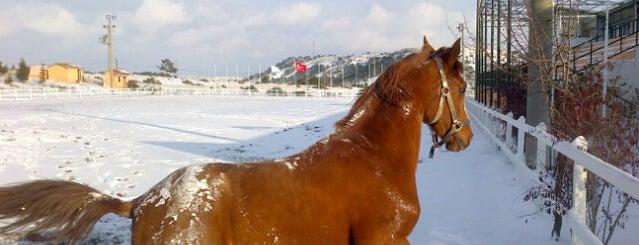 Atlı Spor Kulübü is one of Fadime'nin Beğendiği Mekanlar.