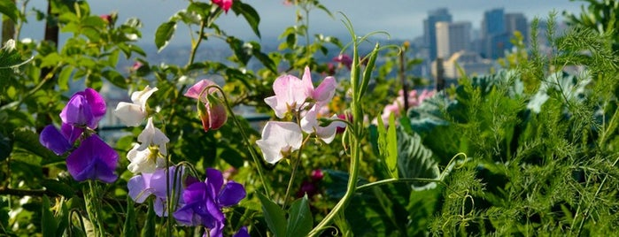Potrero Hill Community Garden is one of Neighborhood Guide to Dogpatch and Potrero Hill.