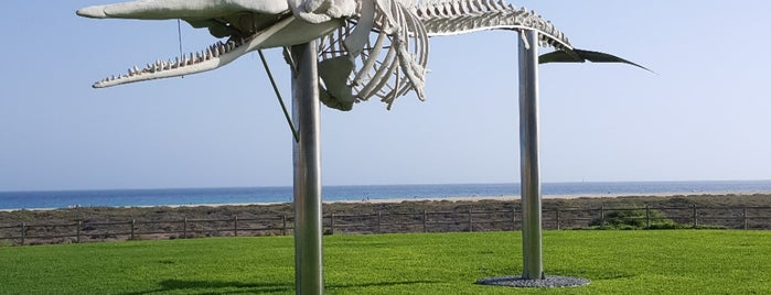 Sperm Whale's Skeleton is one of Fuerteventura 2018.