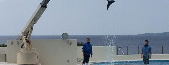 Dolphin Lagoon is one of Okinawa.