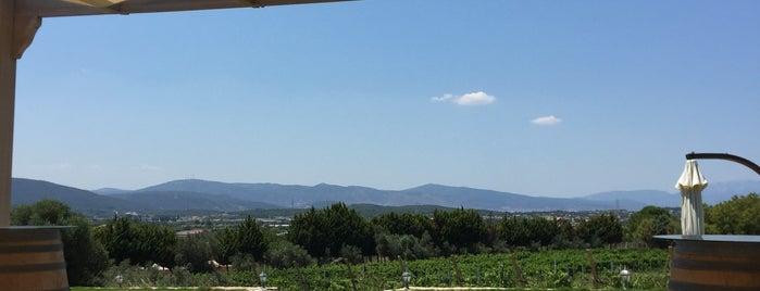 USCA Şarapçılık is one of Locais curtidos por Erman.
