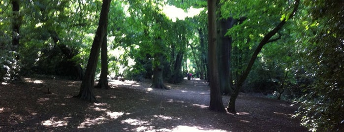 Highgate Wood is one of London.
