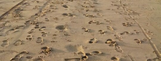 Playas de Rosarito is one of สถานที่ที่ Lu ถูกใจ.