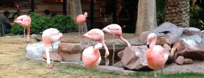 Flamingo Wildlife Habitat is one of Las Vegas All Badges.