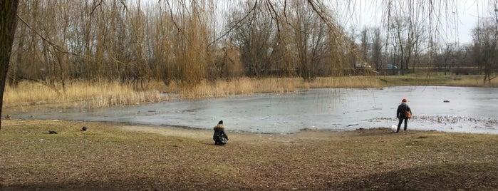 Staw w parku Jana Pawła II is one of Łęgi dębińskie.