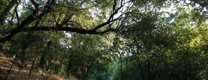 Almaden Quicksilver County Park is one of South Bay To Do's.