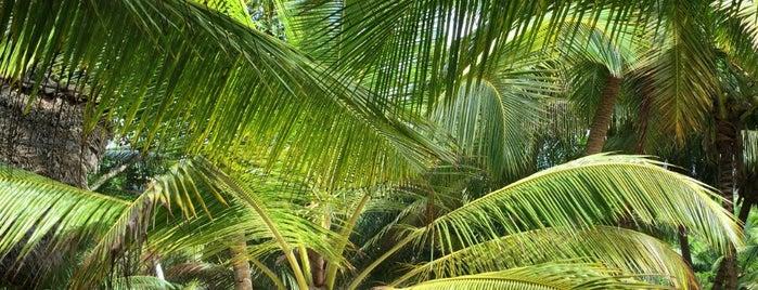 Seychelles is one of Marinaさんの保存済みスポット.