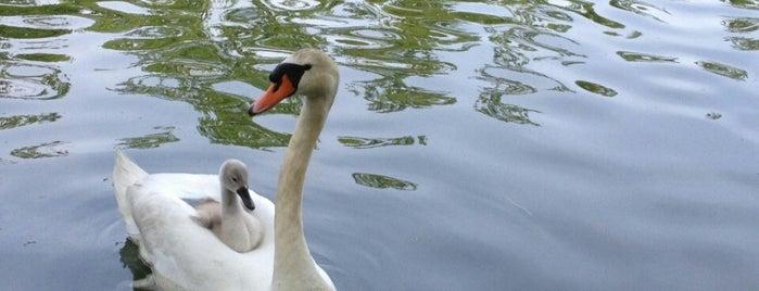 The Duck Pond @ Mill Pond is one of สถานที่ที่ Imran ถูกใจ.