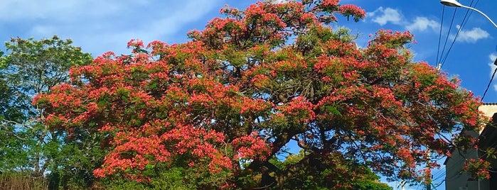 Condominio Estância das Amendoeiras is one of Tempat yang Disukai Warley.