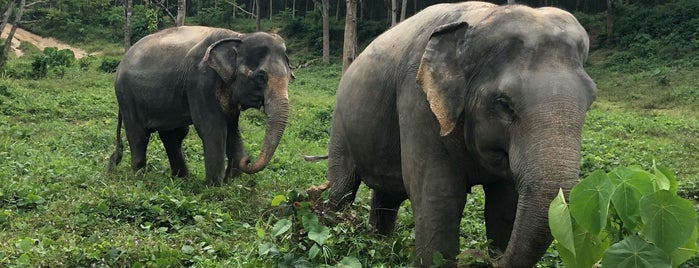 Phuket Elephant Sanctuary is one of Thailand.
