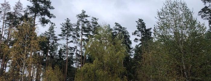 Центральний Ірпінський Міський Парк is one of Orte, die Igor gefallen.