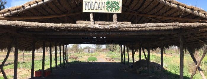 Yolcan is one of Coyoacán.