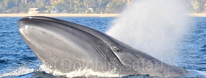 Capt. Dave's Dana Point Dolphin & Whale Watching Safari is one of USA California 🇺🇸.