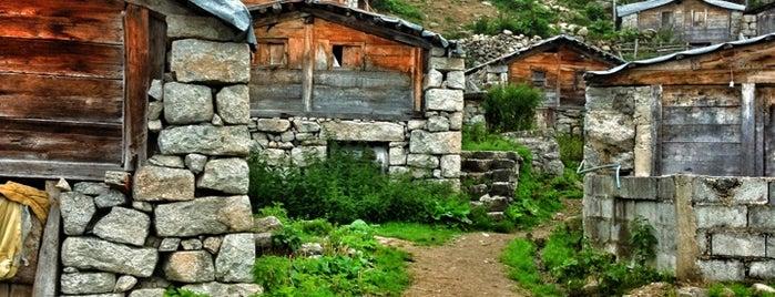 Golazena Yaylası is one of Mountain Resorts In Black Sea Region.