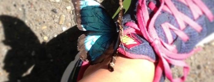 Butterfly Garden is one of Orte, die Dave gefallen.