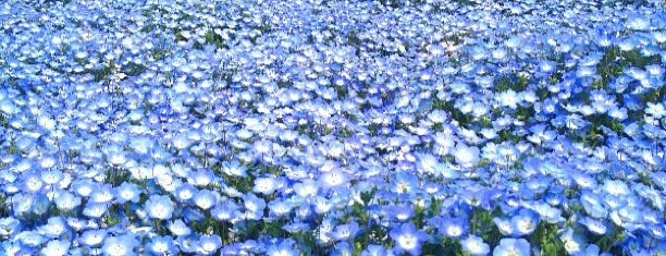 Hitachi Seaside Park is one of Japan/Other.