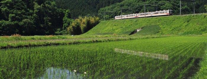 Shimo-goshiro Station is one of Orte, die 高井 gefallen.