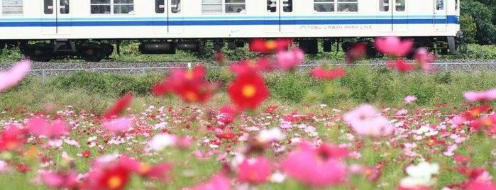 大和田公園 is one of Orte, die 高井 gefallen.