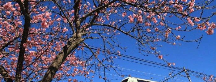 河津川桜並木 is one of Japan/Other.