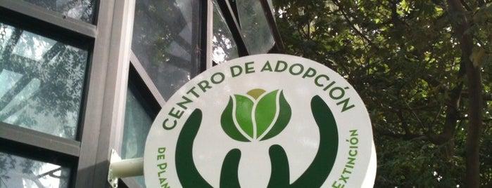 Centro de Adopción de Plantas Mexicanas en Peligro de Extinción is one of Lugares favoritos de Liliana.