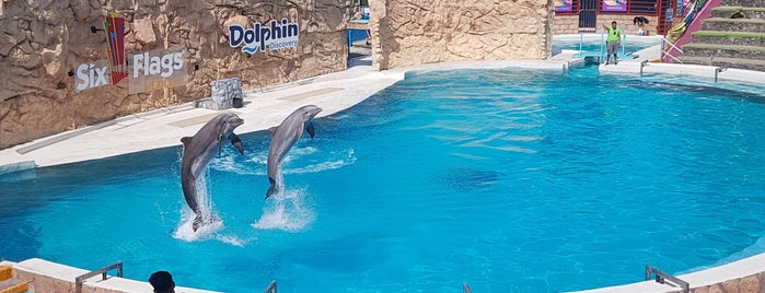 Show Delfines is one of Jack 님이 좋아한 장소.