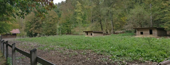 Wildschweingehege im Wildpark is one of สถานที่ที่ Miguel ถูกใจ.