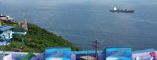 Ocean Park Hong Kong is one of Mevlüt🎬〽⌚🌇🚘💯✔ 님이 좋아한 장소.