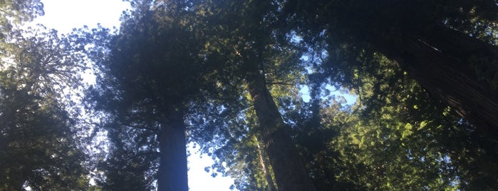 Del Norte Coast Redwood State Park is one of Tempat yang Disukai Torzin S.