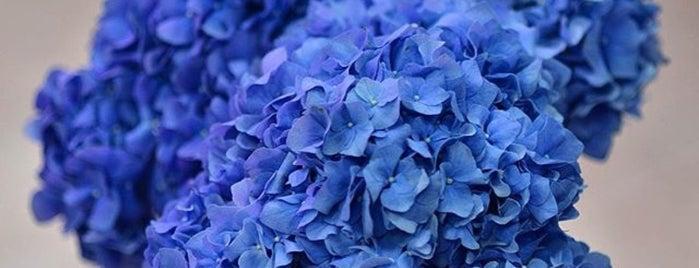 Florist is one of Kinoida'nın Kaydettiği Mekanlar.