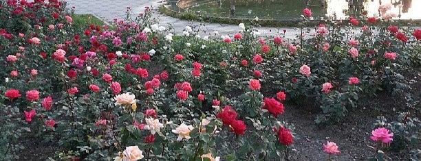 Parcul Trandafirilor is one of Бэкау.