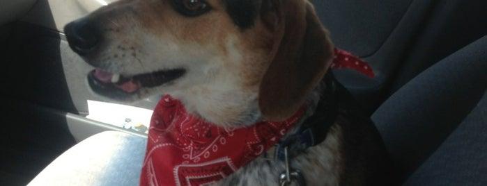 Muddy Paws Pet Grooming And Spa is one of J'ın Beğendiği Mekanlar.