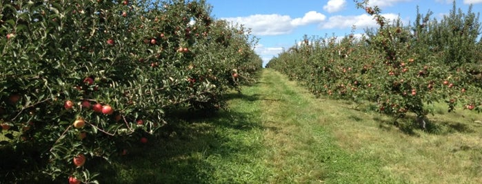 Bishop's Orchard Pick-Your-Own Fields is one of Picking Vegs and fruit - summer and fall.